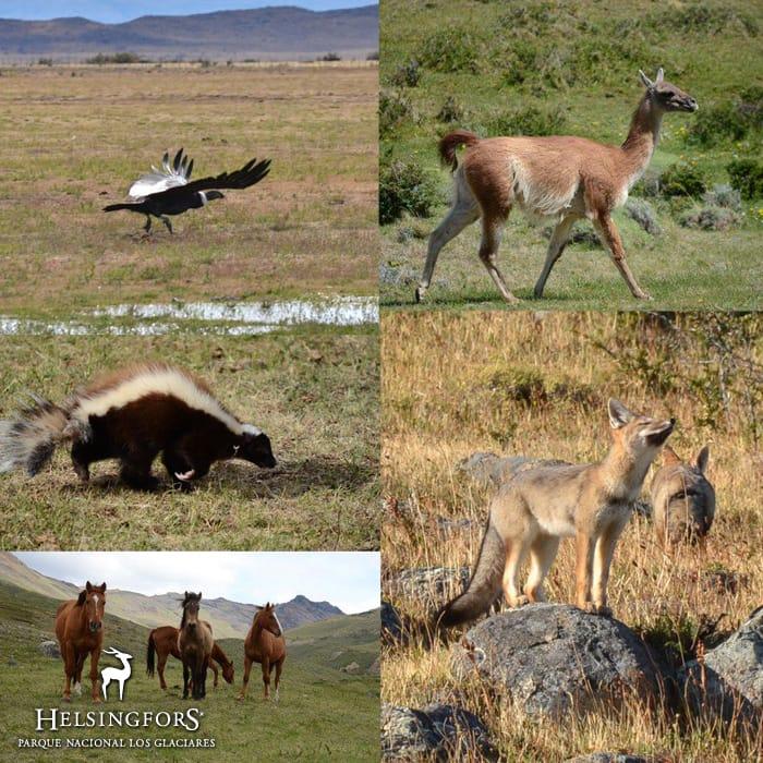 Wildlife & Birds in Patagonia