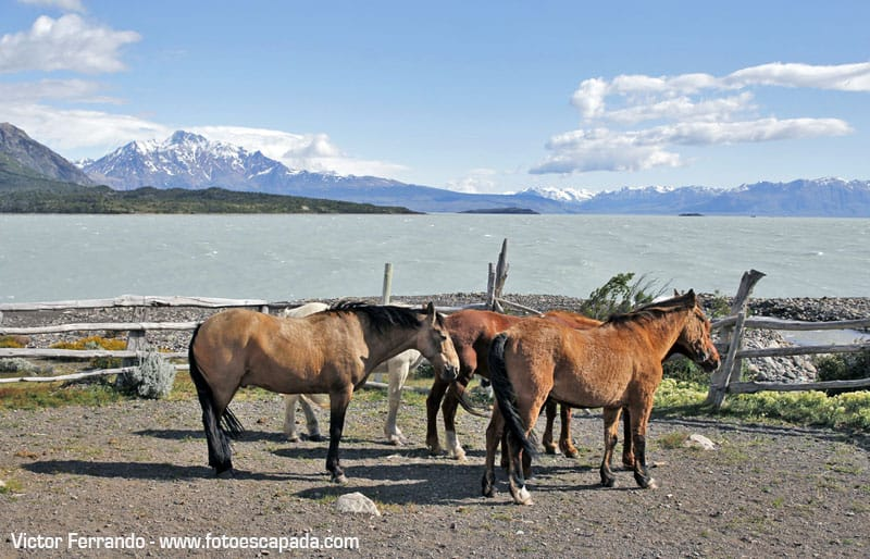 Patagonia Lodge Activity